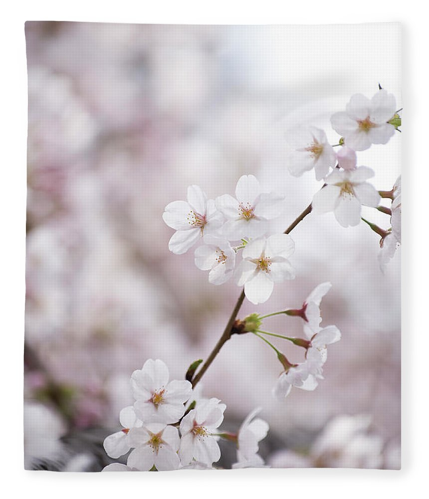 Celebration Fleece Blanket featuring the photograph Cherry Blossoms by Ooyoo