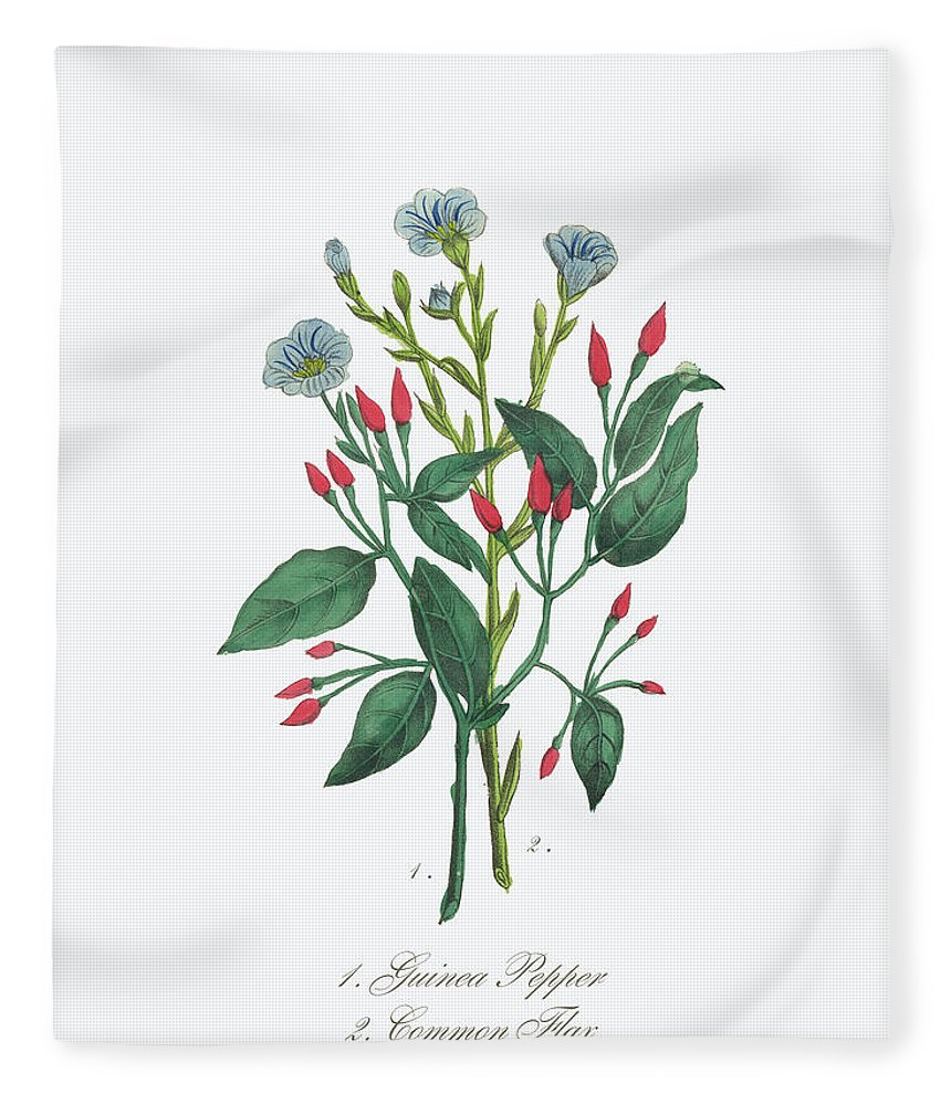 White Background Fleece Blanket featuring the digital art Victorian Botanical Illustration Of by Bauhaus1000