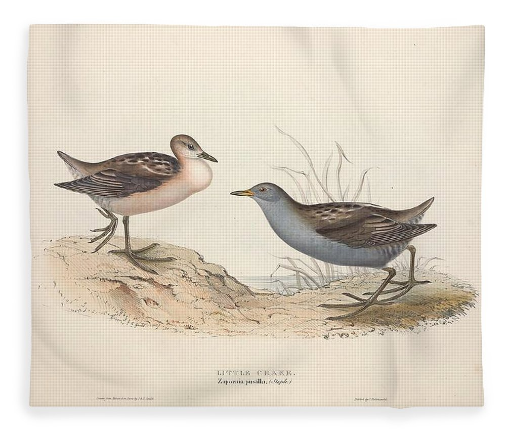 Nature Fleece Blanket featuring the painting Different Types Of Birds Illustrated By Charles Dessalines D Orbigny 1806-1876 21 83 by Charles Dessalines D Orbigny