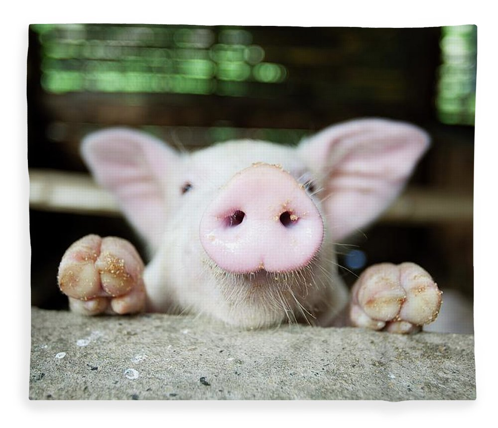 Negros Oriental Fleece Blanket featuring the photograph A Baby Pig In Its Pen by Design Pics / Deddeda