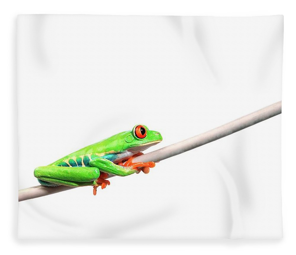 Rope Fleece Blanket featuring the photograph A Frog Hanging On by Design Pics/corey Hochachka