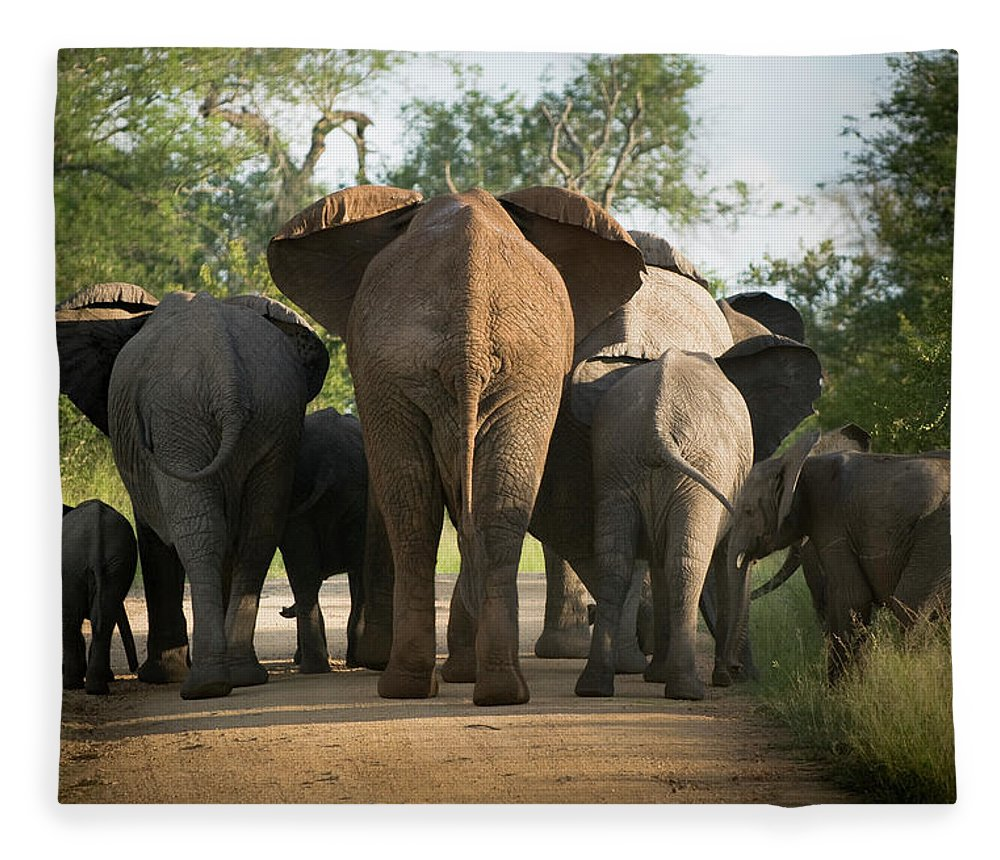 Cow Fleece Blanket featuring the photograph A Herd Of Elephants Heading Away From Us by Jono0001