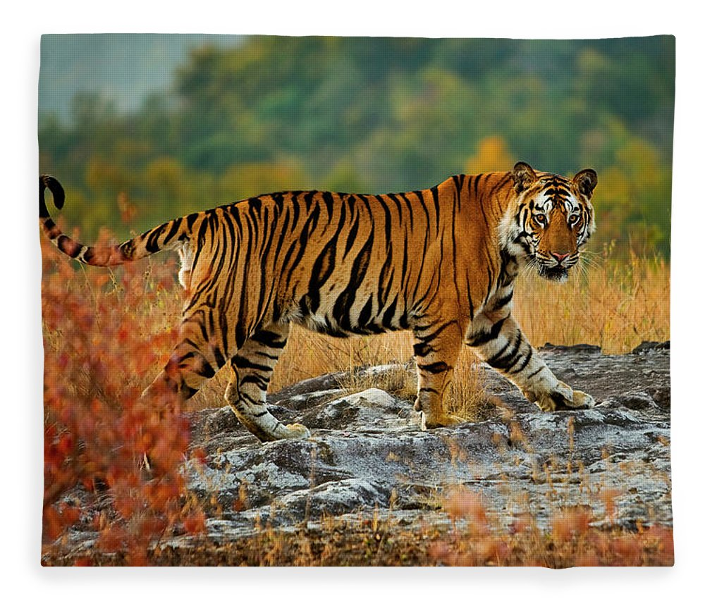 Vertebrate Fleece Blanket featuring the photograph A Large Tiger In Bandhavgarh National by Mint Images - Art Wolfe
