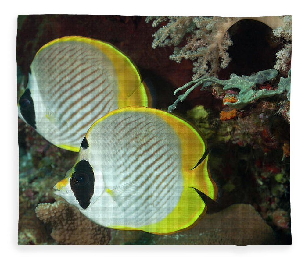Animals In The Wild Fleece Blanket featuring the photograph A Pair Of Panda Butterflyfish by Jeff Hunter