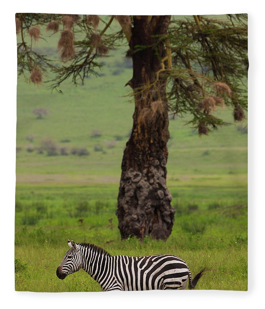 Plains Zebra Fleece Blanket featuring the photograph A Plains Zebra In Ngorongoro by Mint Images - Art Wolfe