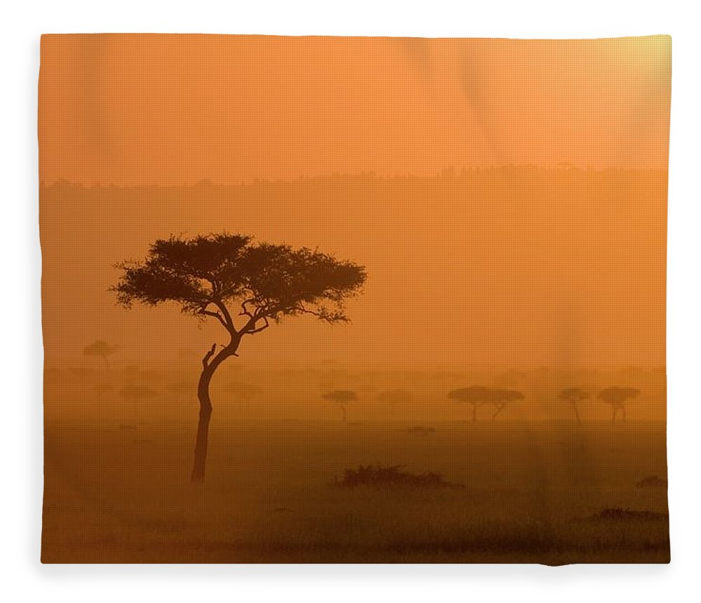 Tranquility Fleece Blanket featuring the photograph Acacia Tree At Sunset, Masai Mara by James Hager / Robertharding