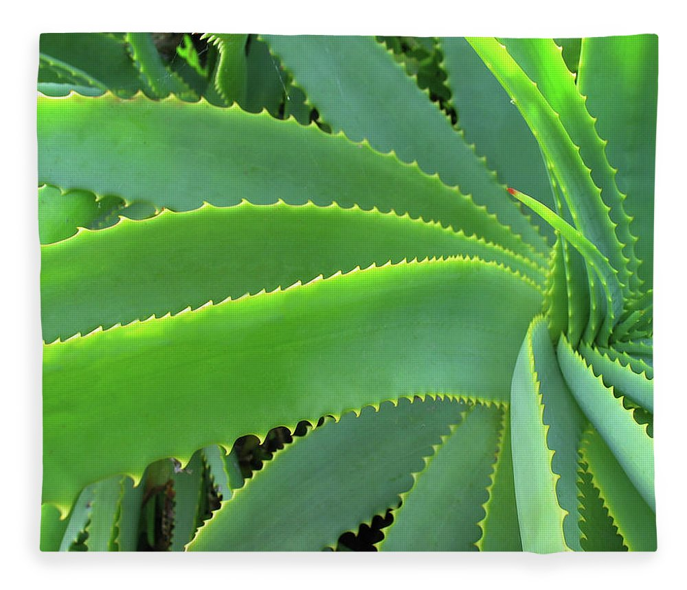 Natural Pattern Fleece Blanket featuring the photograph Aloe Vera - Healing Plant by Lubilub