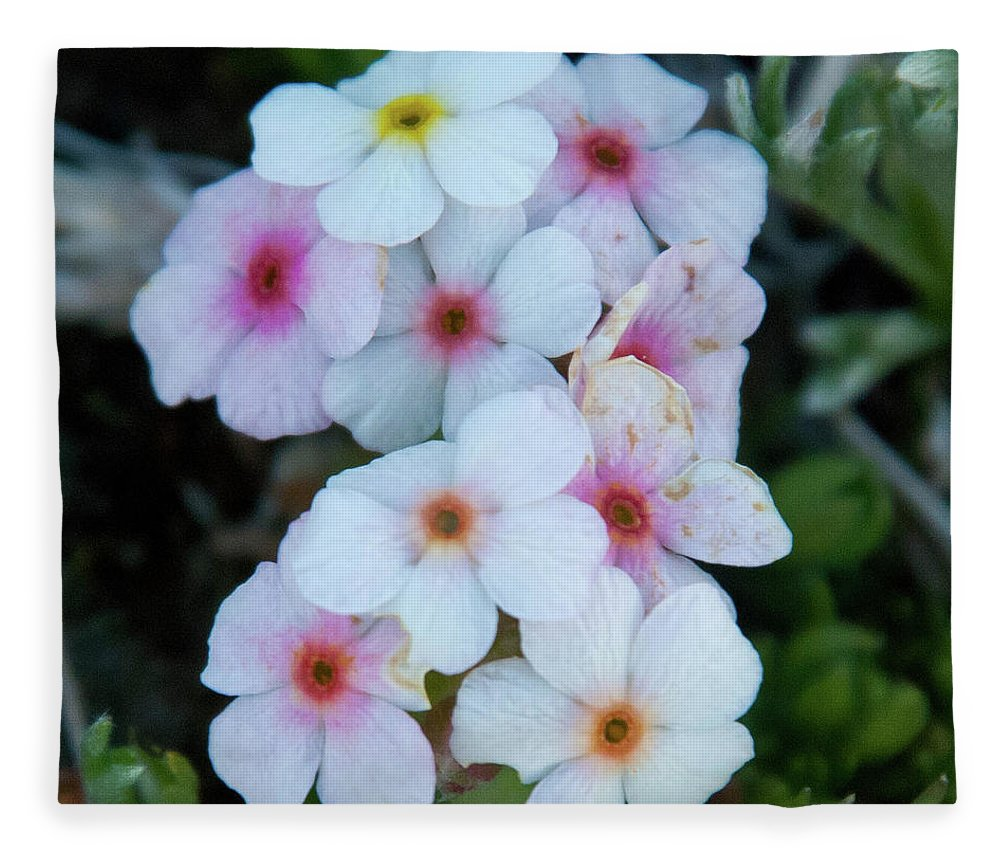 Alpine Rockjasmine Fleece Blanket featuring the photograph Alpine Rockjasmine Up Close by Cascade Colors