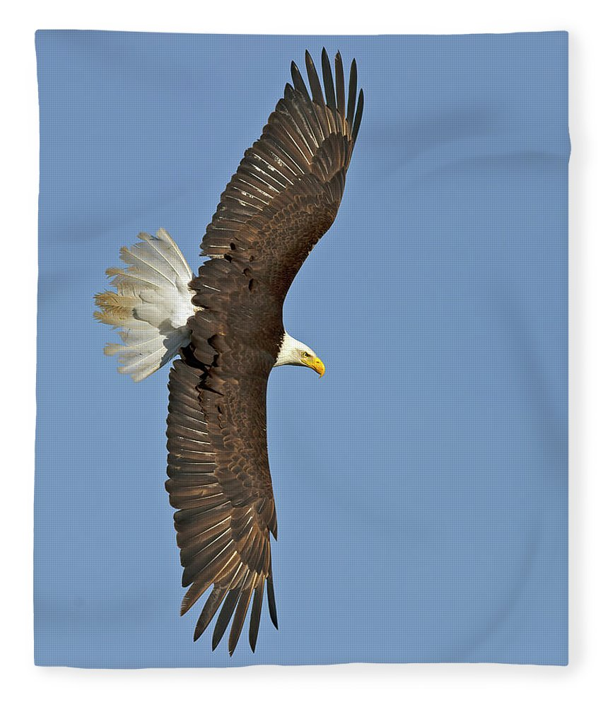 American Fleece Blanket featuring the photograph American Bald Eagle In Flight IIi by Gary Langley