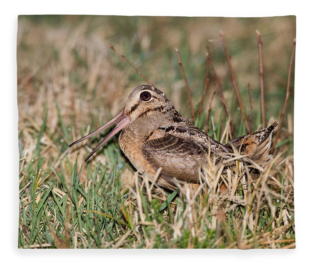 American Woodcock Fleece Blanket featuring the photograph American Woodcock by James Zipp