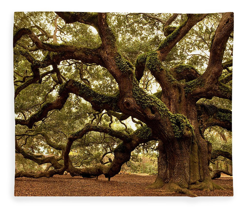Southern Usa Fleece Blanket featuring the photograph Ancient Angel Oak Near Charleston by Pgiam
