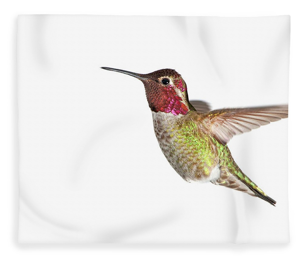 Hanging Fleece Blanket featuring the photograph Annas Hummingbird - Male, White by Birdimages