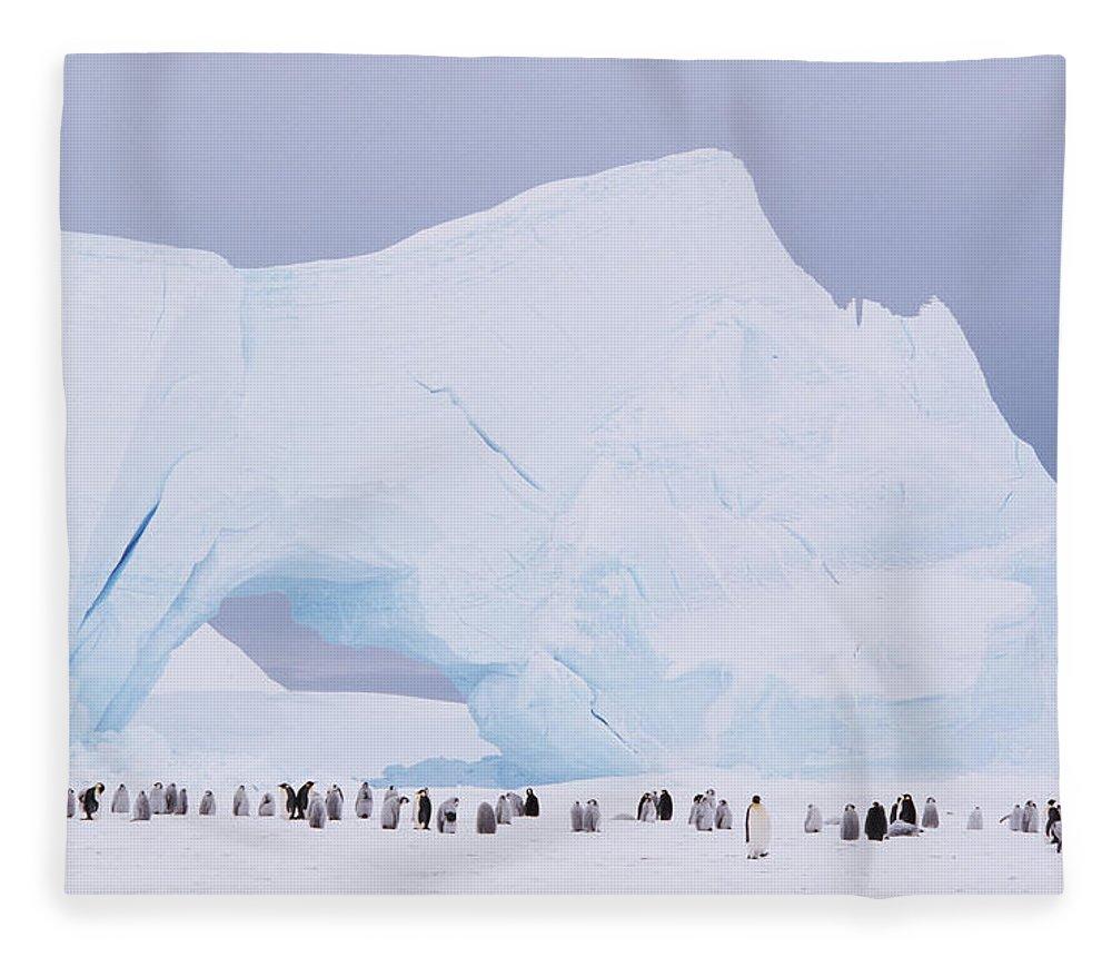 Emperor Penguin Fleece Blanket featuring the photograph Antarctica, Emperor Penguin Aptenodytes by Joseph Van Os