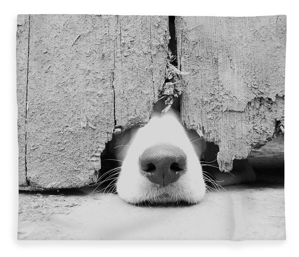 Pets Fleece Blanket featuring the photograph Anyone Out There by By Jake P Johnson