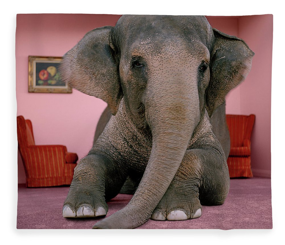 Out Of Context Fleece Blanket featuring the photograph Asian Elephant In Lying On Rug In by Matthias Clamer