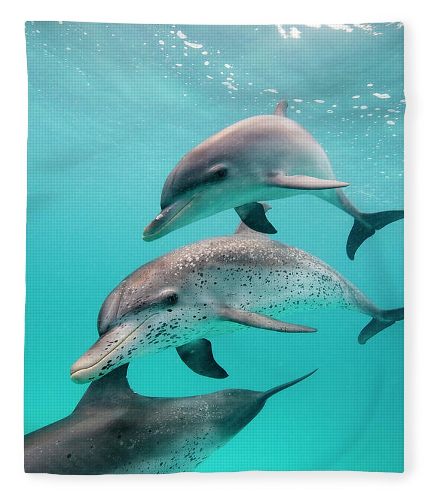Underwater Fleece Blanket featuring the photograph Atlantic Spotted Dolphin Stenella by Stephen Frink