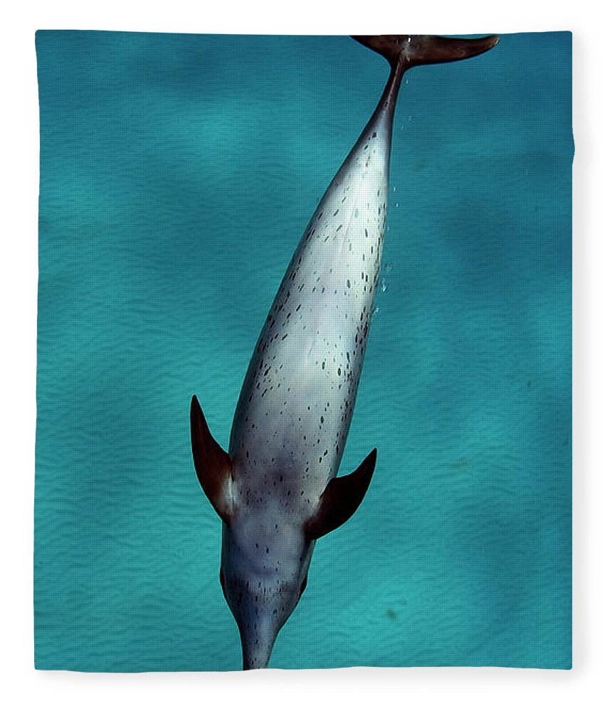 Animal Themes Fleece Blanket featuring the photograph Atlantic Spotted Dolphin by Todd Mintz Www.tmintz.ca