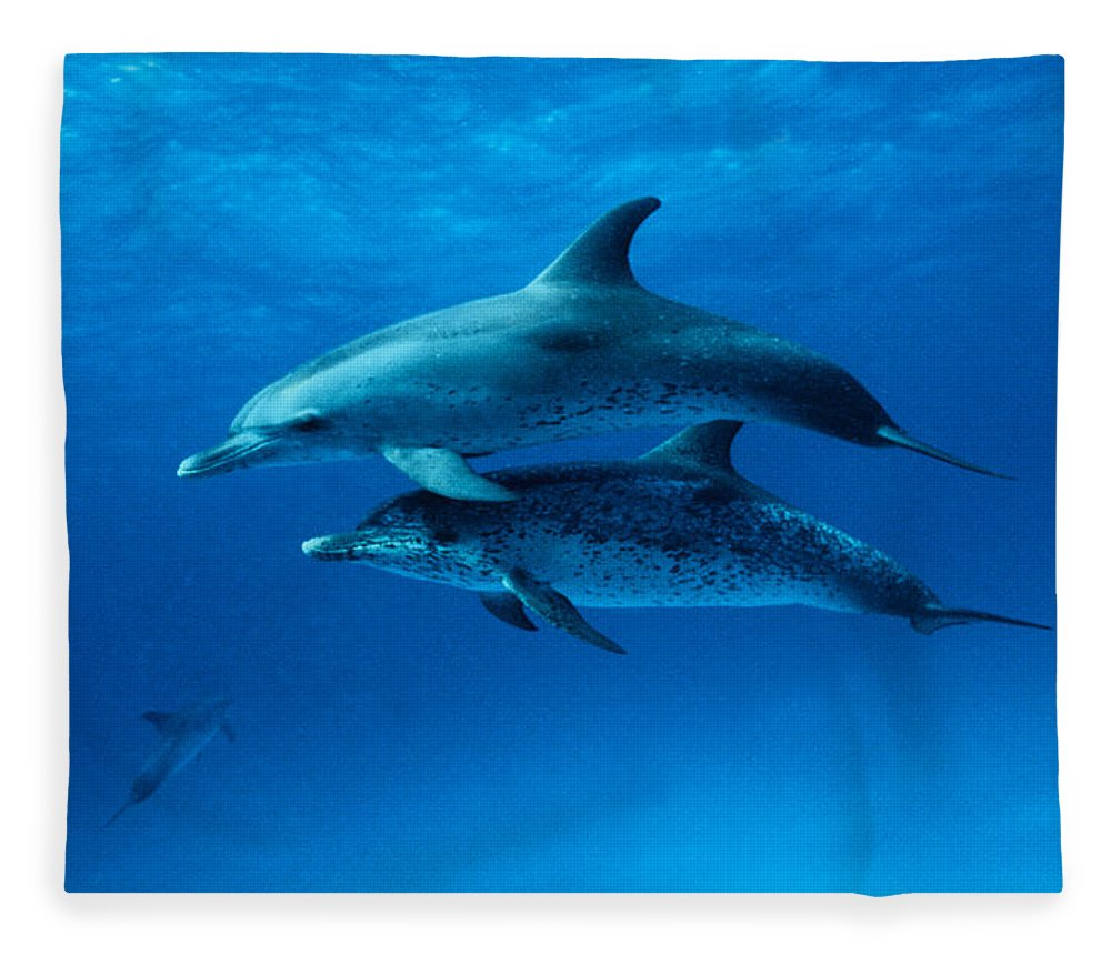 Color Image Fleece Blanket featuring the photograph Atlantic Spotted Dolphins,stenella by Gerard Soury