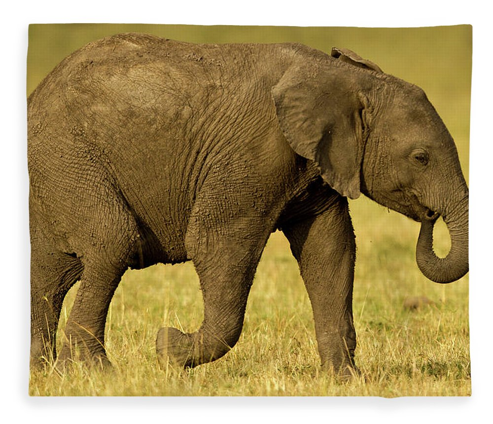 Following Fleece Blanket featuring the photograph Baby Elephant Following The Herd On The by Manoj Shah