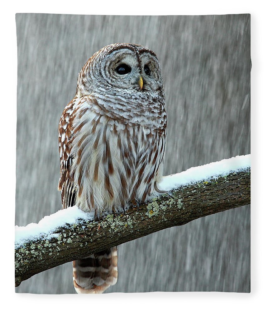 Alertness Fleece Blanket featuring the photograph Barred Owl In The Snow by Alex Thomson Photography