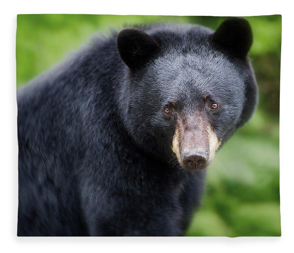 Black Bear Fleece Blanket featuring the photograph Bear Stare by Jerry LoFaro