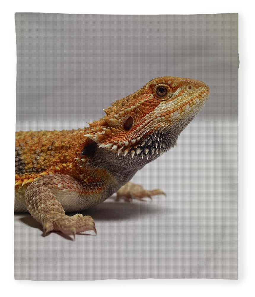 Alertness Fleece Blanket featuring the photograph Bearded Dragon by Dan Burn-forti