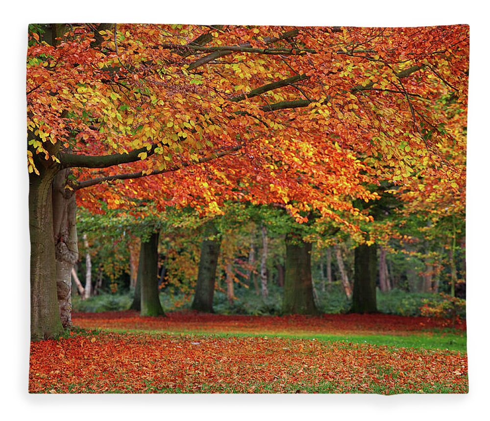 Orange Color Fleece Blanket featuring the photograph Beautiful Autumn In Park by Lorado