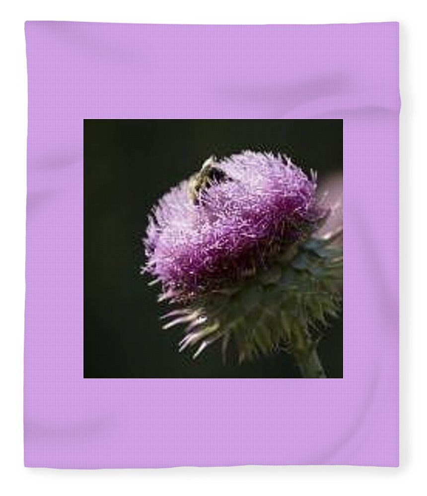 Bee Fleece Blanket featuring the photograph Bee on Thistle by Nancy Ayanna Wyatt