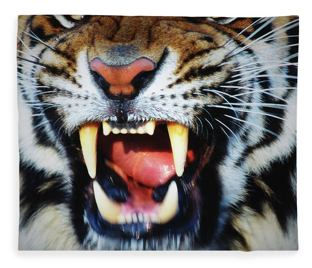 Snarling Fleece Blanket featuring the photograph Bengal Tiger Panthera Tigris Tigris by Mike Hill