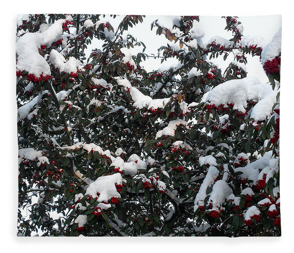 Christmas Fleece Blanket featuring the photograph Berries And Snow by Patrick J Murphy