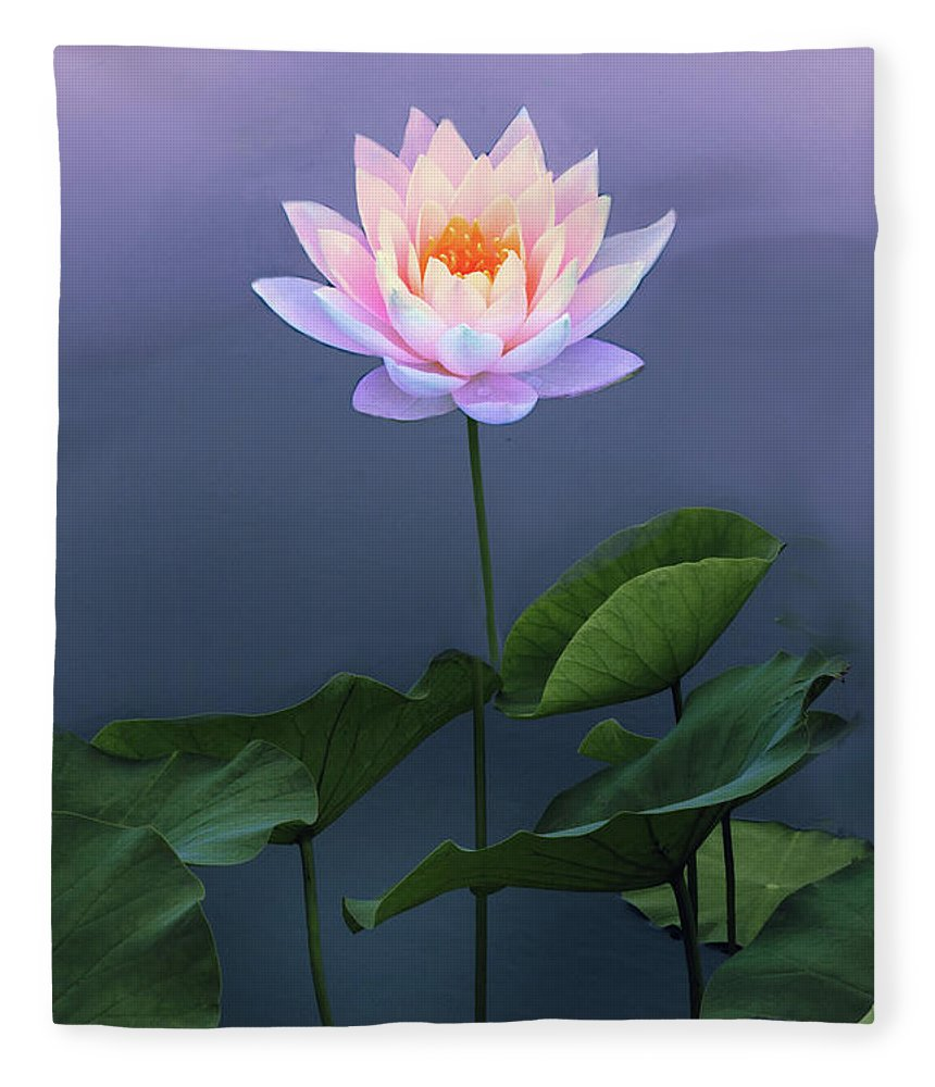 Lotus Fleece Blanket featuring the photograph Come To Light by Jessica Jenney