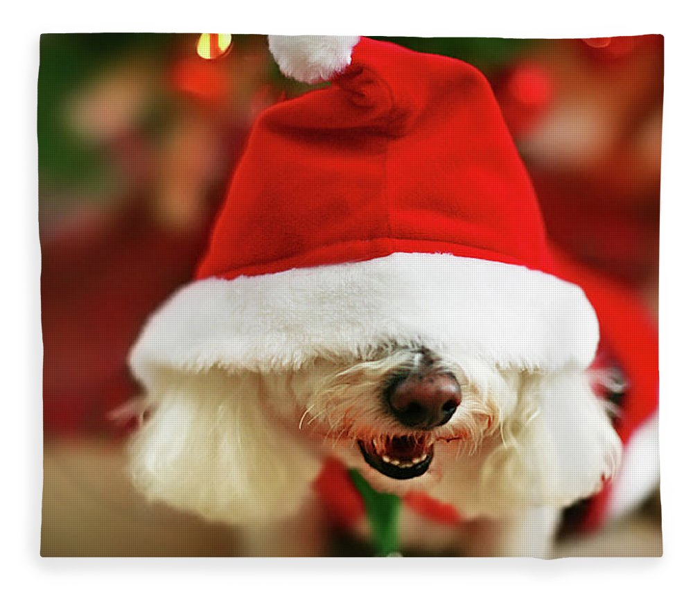 Pets Fleece Blanket featuring the photograph Bichon Frise Dog In Santa Hat At by Nicole Kucera