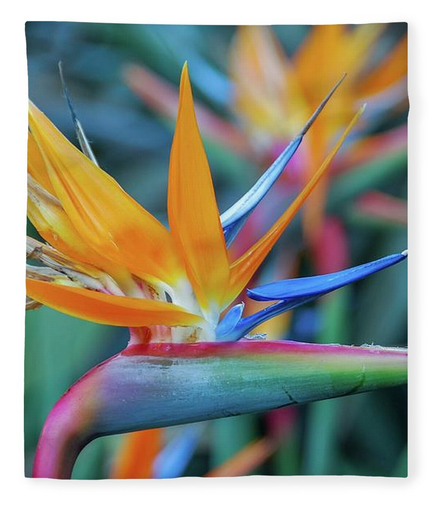 Flowers Fleece Blanket featuring the photograph Bird Of Paradise Flowers by D Davila