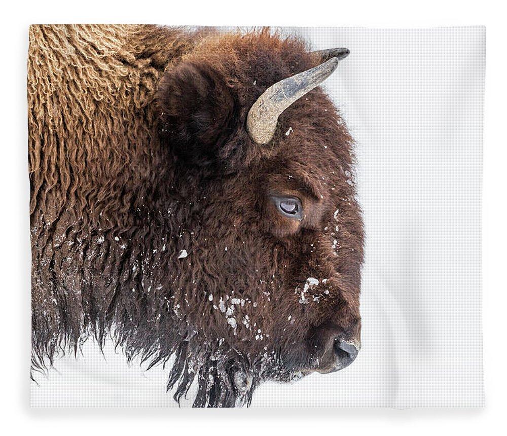 Vertebrate Fleece Blanket featuring the photograph Bison In Winter by Kencanning