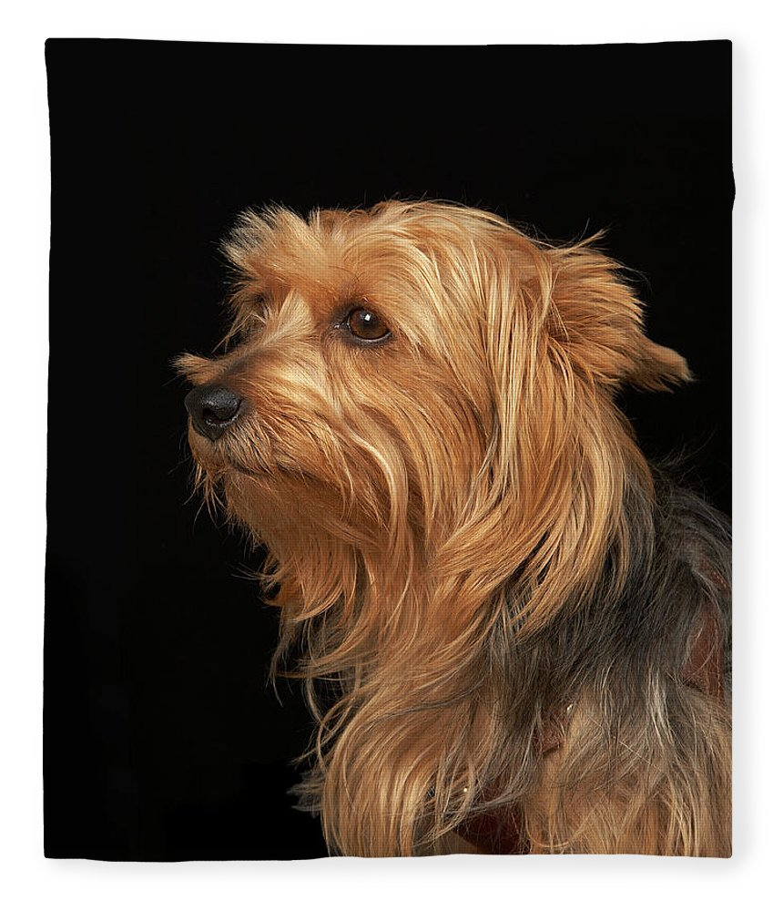 Pets Fleece Blanket featuring the photograph Black And Brown Yorkie Left Profile On by M Photo