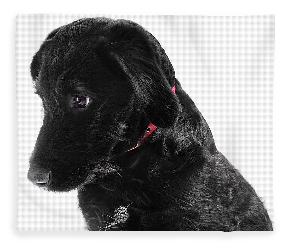 Pets Fleece Blanket featuring the photograph Black Labradoodle by Gandee Vasan
