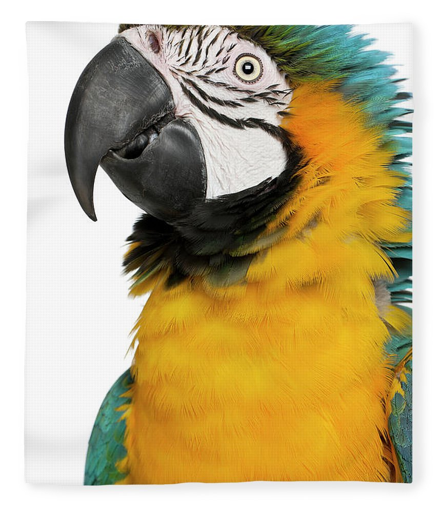 Macaw Fleece Blanket featuring the photograph Blue And Yellow Macaw, Ara Ararauna by Life On White