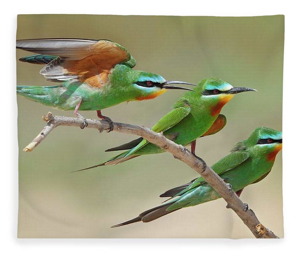 Blue Cheeked Bee-eater Fleece Blanket featuring the photograph Blue Checked Bee Eaters by Sulqatar@yahoo.com