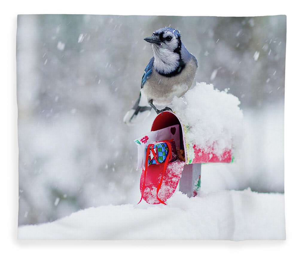 Blue Jay Fleece Blanket featuring the photograph Blue Jay In Snow On Tiny Mailbox by Nancy Rose