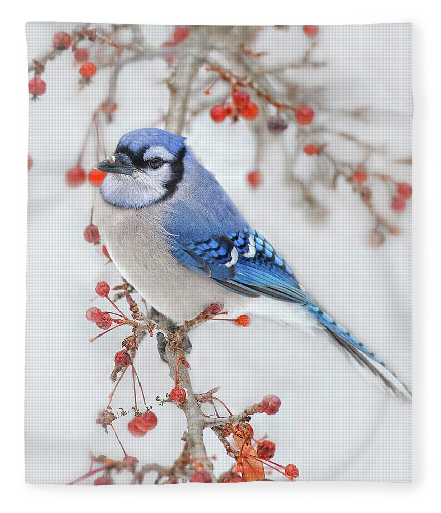 Blue Jay Fleece Blanket featuring the photograph Blue Jay In Wild Apple Tree by Betty Wiley
