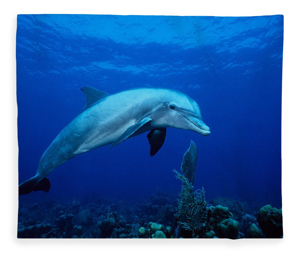 Underwater Fleece Blanket featuring the photograph Bottlenose Dolphin,tursiops by Gerard Soury