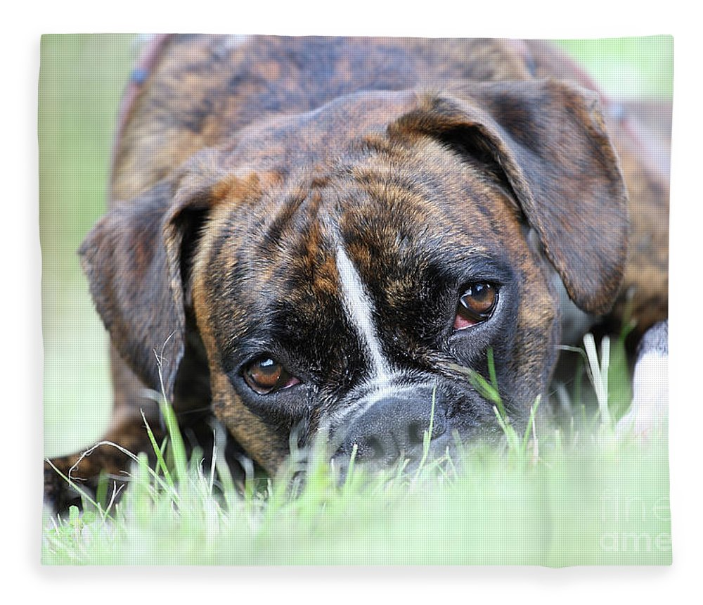 Boxer Fleece Blanket featuring the photograph Boxer Dog by Jana Behr
