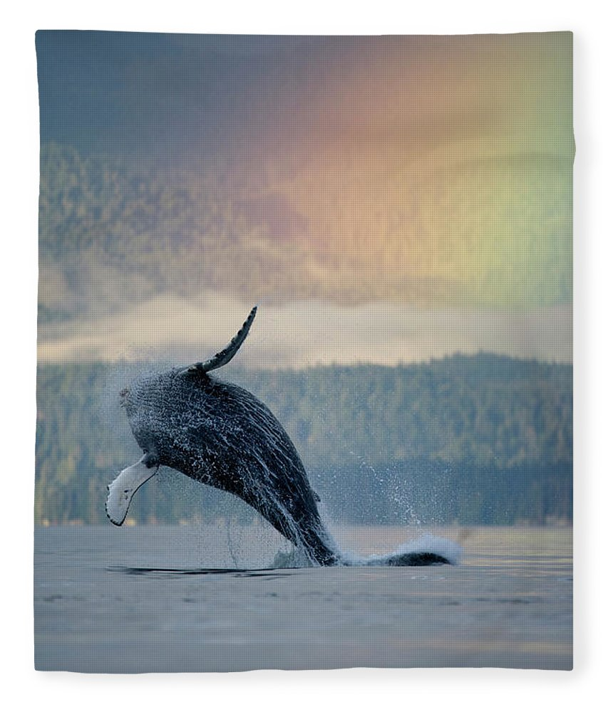Animal Themes Fleece Blanket featuring the photograph Breaching Humpback Whale And Rainbow by Paul Souders