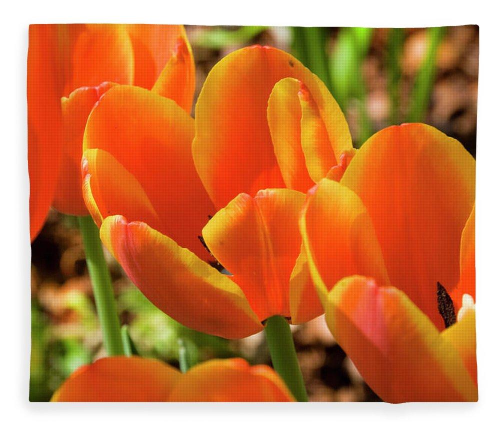 Flowerbed Fleece Blanket featuring the photograph Bright Orange Tulips by Earleliason