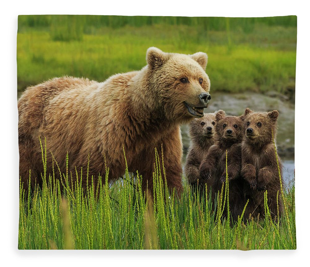 Brown Bear Fleece Blanket featuring the photograph Brown Bear Sow And Cubs, In The Long by Mint Images - Art Wolfe