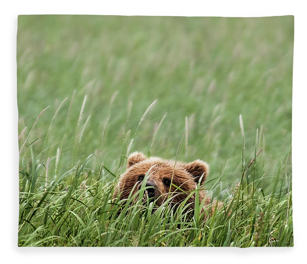 Katmai Peninsula Fleece Blanket featuring the photograph Brown Bear by Trevor Johnston / Eye Meets World Photography