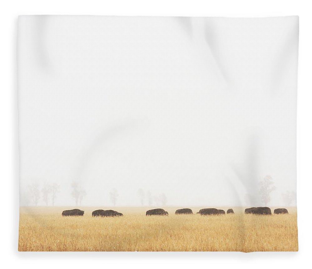 Scenics Fleece Blanket featuring the photograph Buffalo Bison Herd Migration Fog by Chuckschugphotography