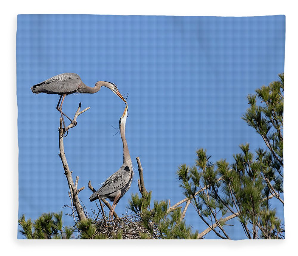 Great Blue Herons Fleece Blanket featuring the photograph Building For Future Generations 2019-1 by Thomas Young