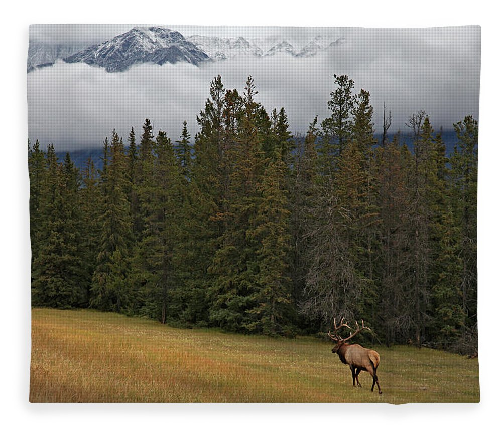 Snow Fleece Blanket featuring the photograph Bull Elk In Meadow With Snow Covered by Guy Crittenden