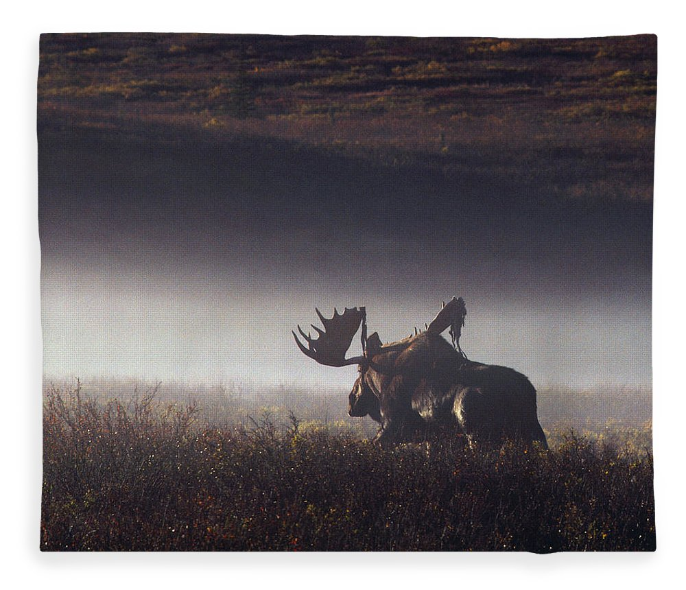Majestic Fleece Blanket featuring the photograph Bull Moose Alces Alces Walking Through by Johnny Johnson